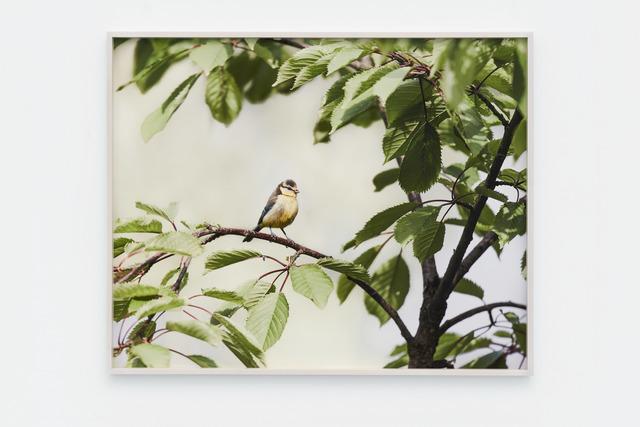 , 'Bird - Landscape 2,' 2015, Galerie Nordenhake