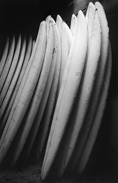 Anthony Friedkin, 'Surfboard Blanks - Santa Monica Canyon, California', 1977, CHRISTOPHE GUYE GALERIE