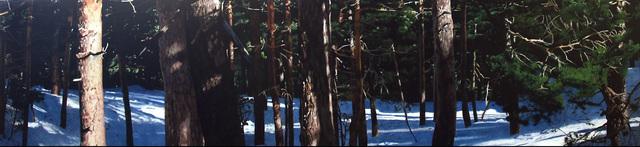 Eloy Morales, 'Bosque con filtraciones solares 2', 2008, Ansorena Galeria de Arte