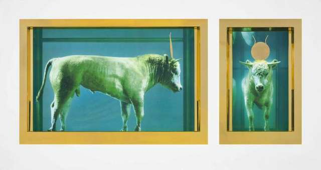 Damien Hirst, 'The Golden Calf', 2009, DTR Modern Galleries