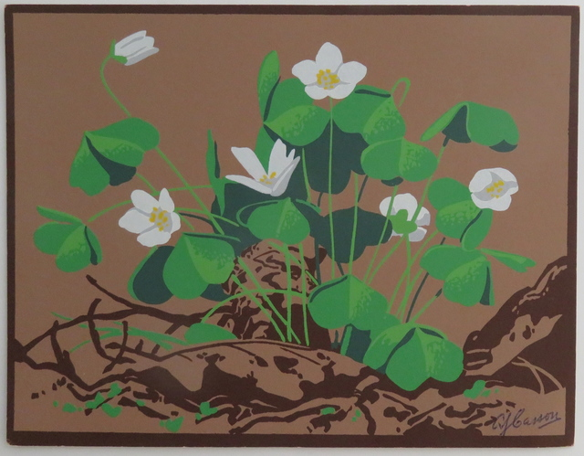 , 'Clover Flowers,' , Arctic Experience McNaught Gallery