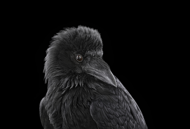 , 'Raven #2, Albuquerque, NM,' 2013, photo-eye Gallery