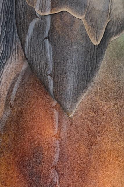 , 'My skin,' 2017, The Art of Wild Gallery