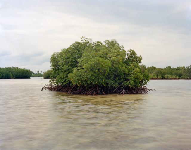 Kang Jeauk, 'Mangrove Forest, Olango Island, Philippines', 2012, Artbit Gallery