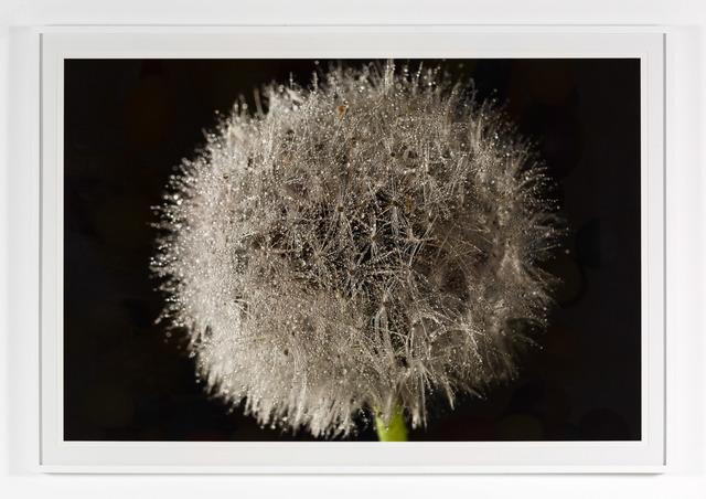 , 'Dandelion,' 2013, Nina Johnson