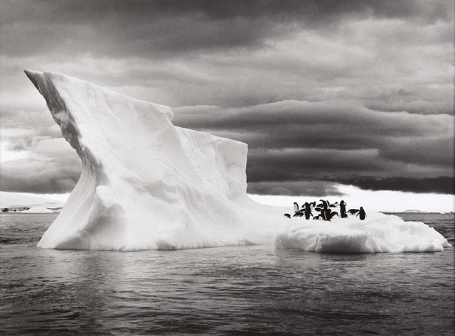 , 'The Penguins of Paulet Island Resting on an Iceberg, Antarctica,' 2005, Huxley-Parlour