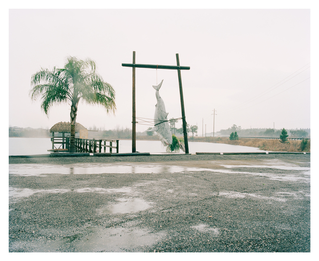 , 'Shark, Highway 27, Florida,' 2011, Francesca Maffeo Gallery