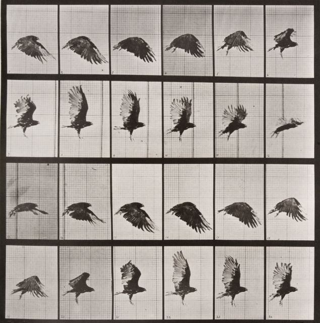 , 'Animal Locomotion: Plate 765 (Crow in flight),' 1887, Huxley-Parlour