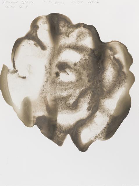 , 'Butterhead Lettuce (Lactuca sativa),' 2014, Parrish Art Museum