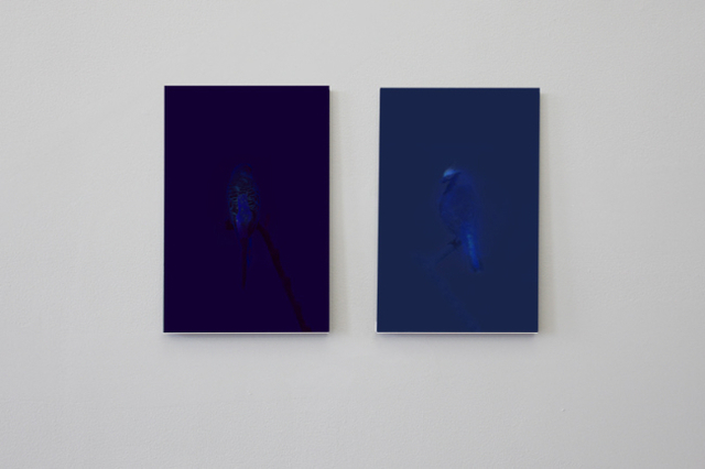, 'Budgie/ UV (left panel), Blue Tit/UV (right panel), From theseries Watermarks,' 2012, Shanghai Gallery of Art