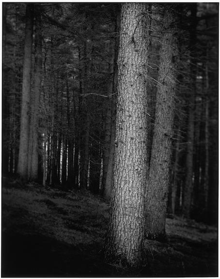 Paul Hart, 'Penumbra', 2007, The Photographers' Gallery | Print Sales