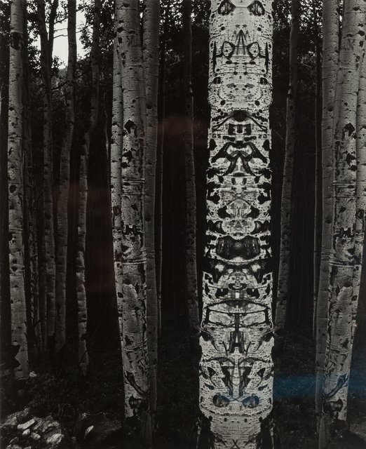 Jerry Uelsmann, 'Totemic Aspen', 1970, Heritage Auctions