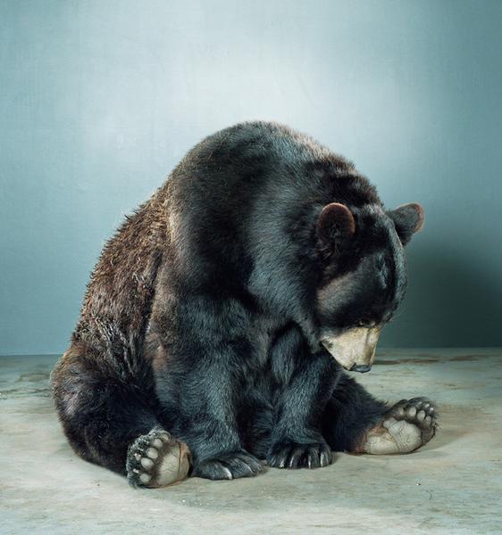 , '88K-41 (Bonkers black bear),' , Bau-Xi Gallery