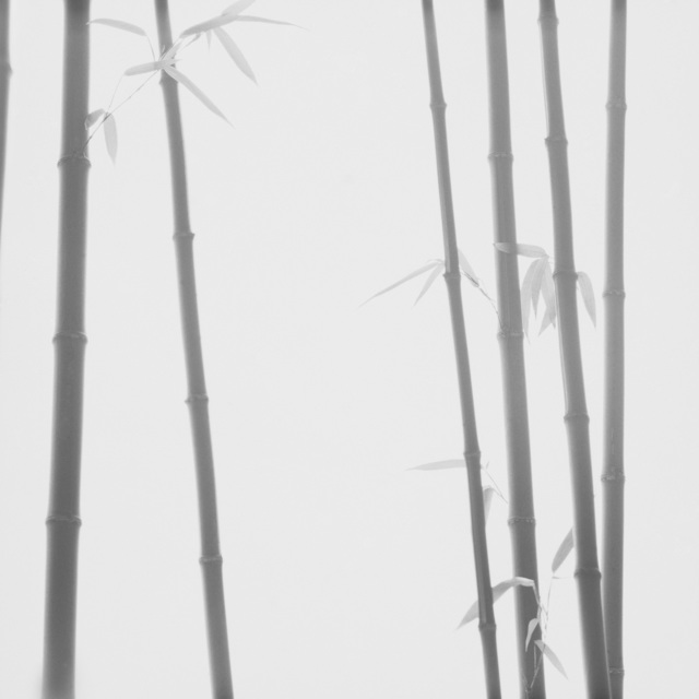 , 'Bamboo Grey #2 - ElliottHalls Gallery Collectors Print,' 2019, ElliottHalls