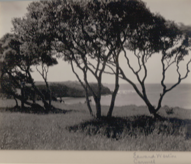 , 'Carmel, Trees,' ca. 1940, Weston Gallery