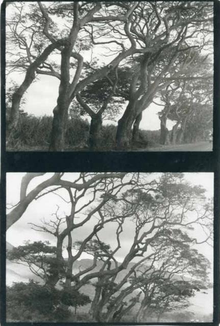 , 'Maui, Hawaii,' 1970, Kate Vass Galerie
