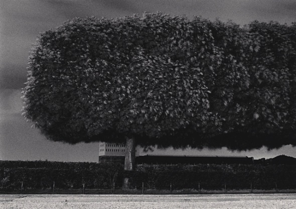 , 'Windy Trees, Les Tuileries, Paris, France,' 1984, PDNB Gallery