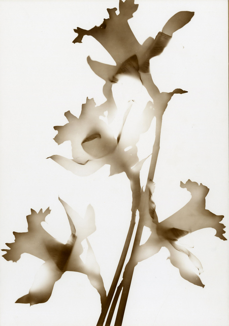 , 'Daffodil,' ca. 1960, Thomas French Fine Art