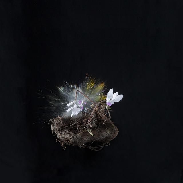 , 'Black Cyclamen D02,' 2018, Talley Dunn Gallery