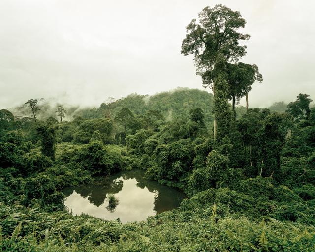 , 'Primary forest 02, lake, Malaysia,' 2012, Galerie f5,6