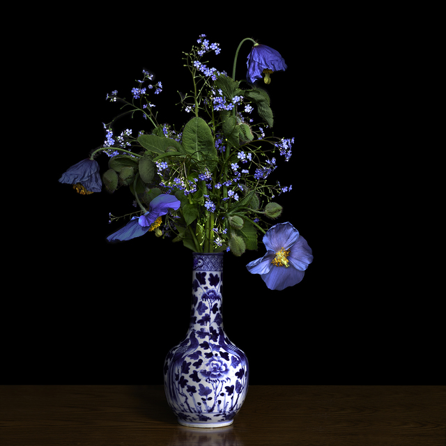 , 'Blue Poppy in a Blue and White Chinese Vase,' 2018, Galerie de Bellefeuille