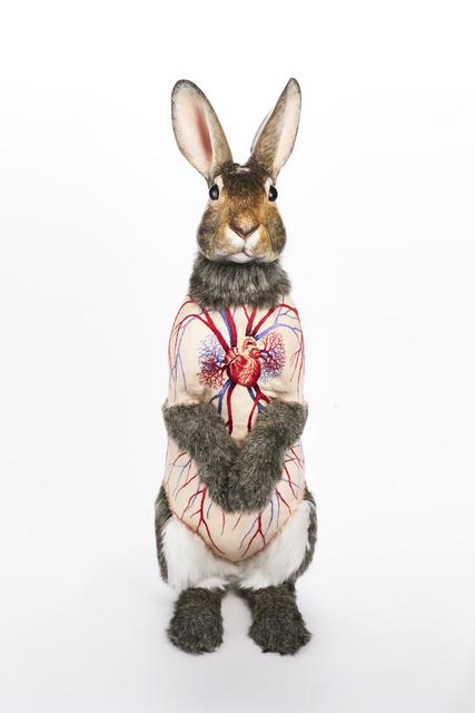 , 'Flayed Rabbit, Cottontail,' 2017, Bernice Steinbaum Gallery