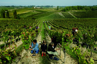 Exclusive Fine Wine Experience in Bordeaux