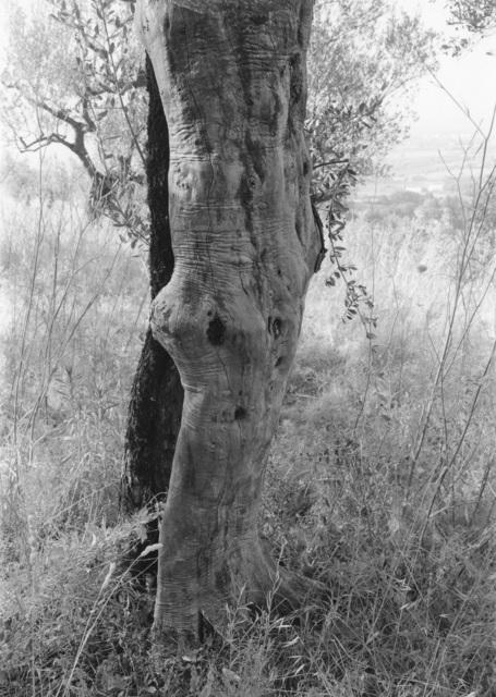 , 'Tuscan Trees #27,' 1998, Wirtz Art