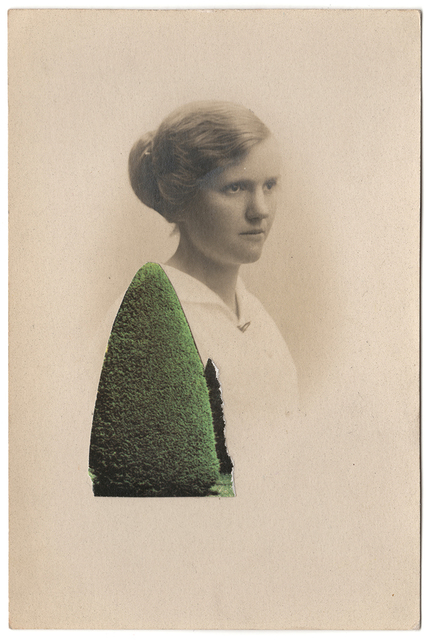 , 'Hedge ,' 2018, Gina Cross