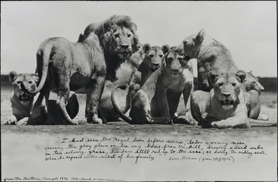 Peter Beard, 'Lion Pride from The End of the Game,' 1976, Phillips: Photographs (April 2017)