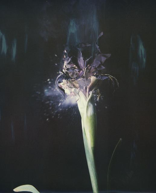 , 'Iris Atropurpea 04B P,' 2018, Yancey Richardson Gallery