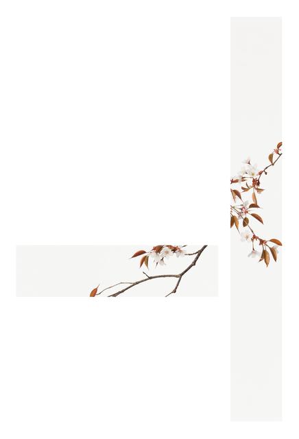 Takashi Tomo-oka, 'Yamazakura 1 ( Wild cherry blossoms )', 2015, Ippodo Gallery