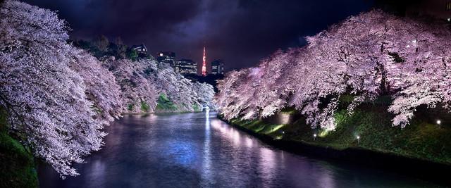 David Drebin, 'Pink Nights Tokyo', 2015, CHROMA GALLERY