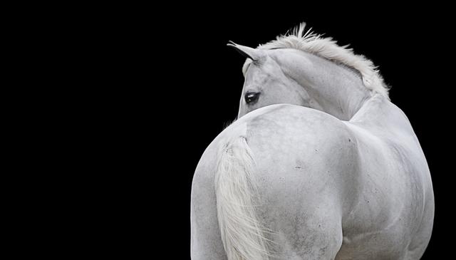 , 'Horse 91,' 2014, Contempop Gallery