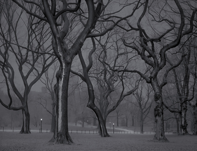 , 'The Mall - 4am - Deep In A Dream - Central Park,' 2013, Holden Luntz Gallery