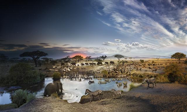 Stephen Wilkes, 'Serengeti National Park, Tanzania', 2015, Archival digital pigment print, Robert Klein Gallery