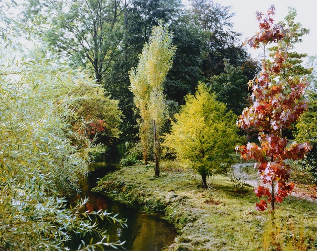 Stephen Shore, 'Trees by the stream', 2002, Chelsea Art Group