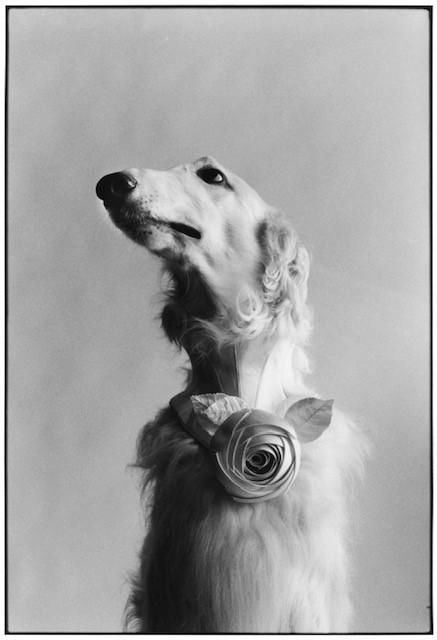 Elliott Erwitt, 'New York City (Dog Portrait)', 1999, LongHouse Reserve: Benefit Auction 2019