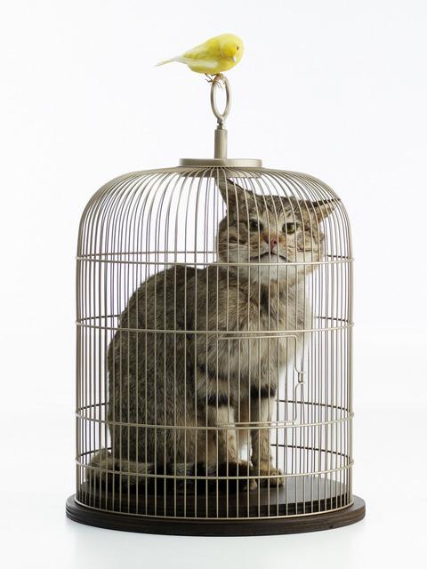 , 'Catt,' 2010, Carroll / Fletcher
