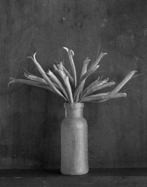 , 'Bottle with Sharon's Seeds,' 1998, photo-eye Gallery