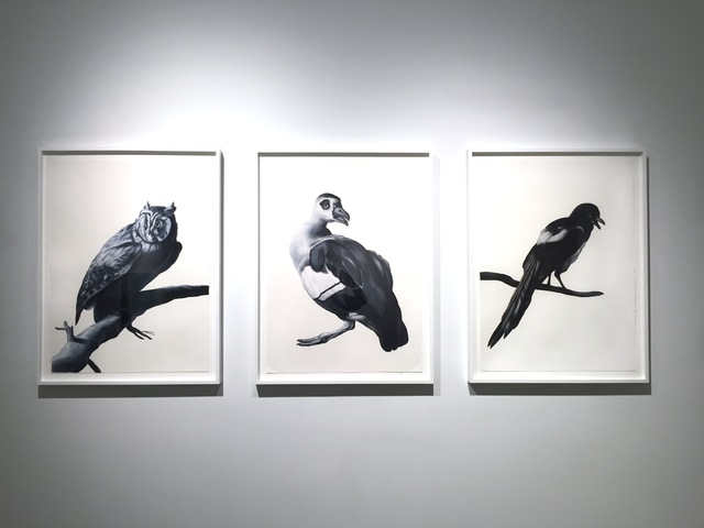 Shelley Reed, 'On a Branch (after Duranti), Glance (after Weenix), Magpie (after Hondecoeter)', 2016, Drawing, Collage or other Work on Paper, Oil on paper, Sears-Peyton Gallery