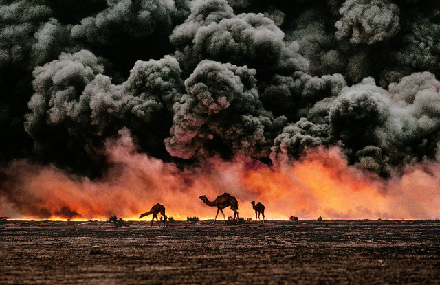, 'Struggling camels silhouetted against the oil-fire, al-Ahmadi oil field, Kuwait,' 1991, Sundaram Tagore Gallery