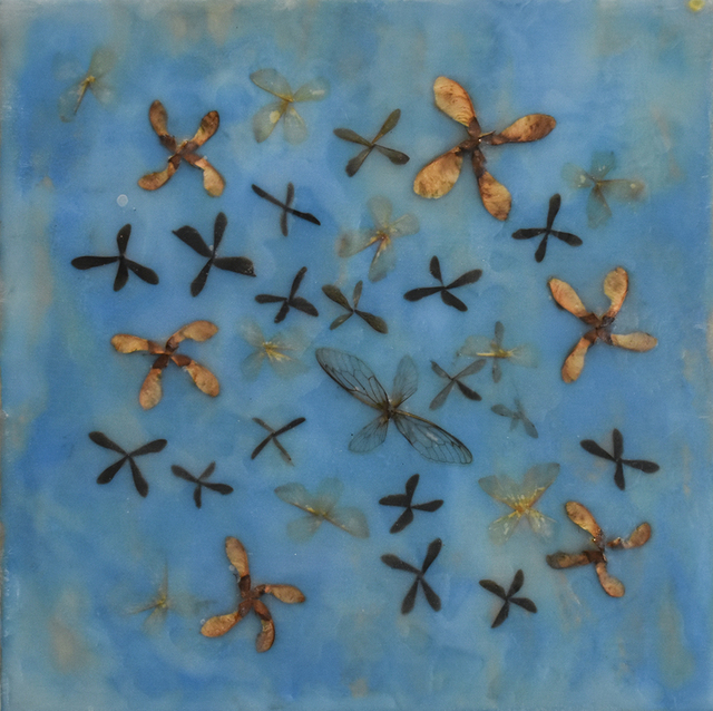 Allyson Levy, 'Wings and Maple', 2018, Carrie Haddad Gallery