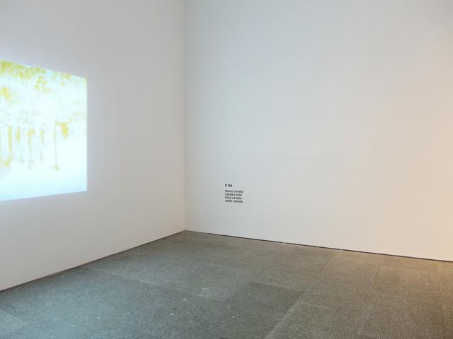 , 'Diez blancos (blanco camelia),' 2015, Estrany - De La Mota