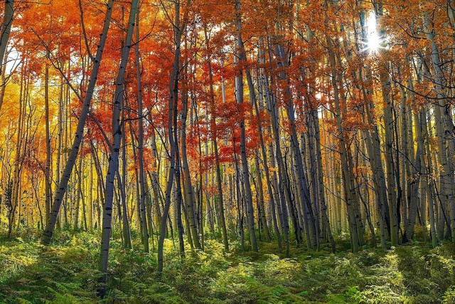 Peter Lik, 'Autumn Splendor', 2012, michael lisi / contemporary art