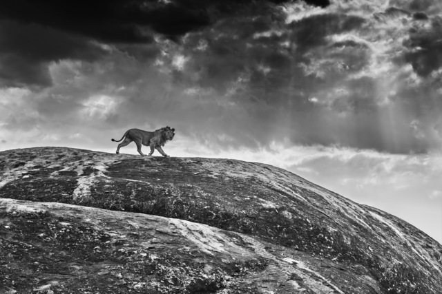David Yarrow, 'Rock Star', ca. 2016, Isabella Garrucho Fine Art