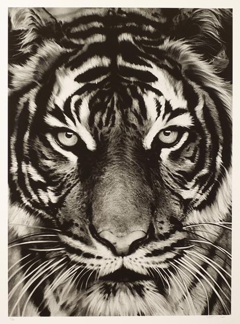 , 'Tiger,' 2011, Galerie Boisseree