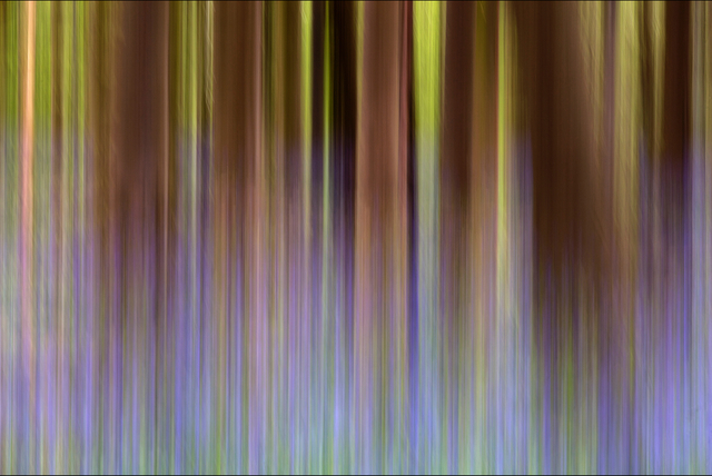 , 'Pure Nature 38, Sonian Forest, Brussels,' 2014, Galerıe Blue Square