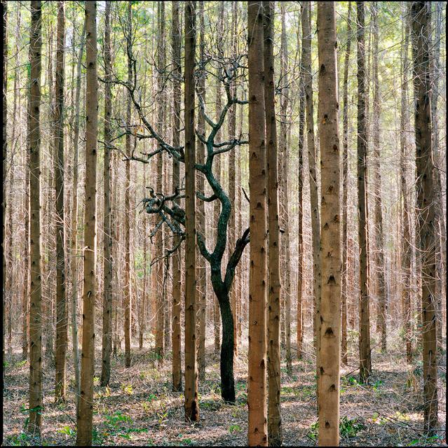 , 'Sufocamento #21 da série madeira de Lei,' 2014, Roberto Alban Galeria de Arte