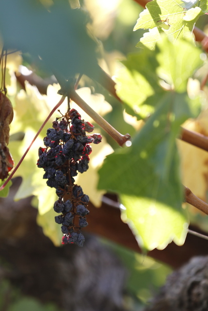 , 'Vin,' 2012, ACS GALLERY